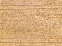 Opinión aérea sobre un campo de trigo Foto de archivo libre de regalías