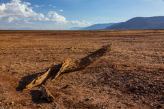 Opinión africana del paisaje del lago Manyara en la estación seca Foto de archivo libre de regalías