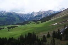 Opinión agradable de la montaña en el bosque Imágenes de archivo libres de regalías
