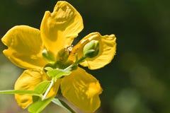 Opinión amarilla hermosa de la parte posterior de la flor en luz del sol y fondo natural verde borroso Fotos de archivo