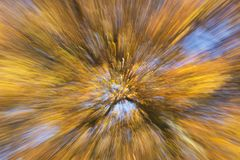 Opinión artística sobre un árbol hermoso con las ramas llenas de estallar las hojas de otoño anaranjadas y amarillas imagen de archivo libre de regalías