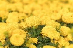 Opinión ascendente cercana de la naturaleza de la flor bajo luz del sol foto de archivo libre de regalías