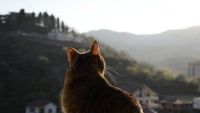 Opinión ascendente cercana el gato curioso metrajes