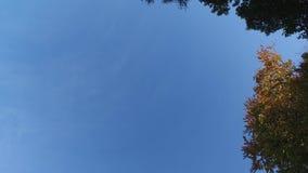 Opinión ascendente del cielo que mira para arriba a través de árboles del otoño almacen de video