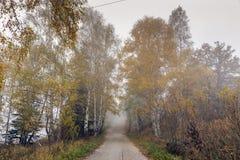 Opinión asombrosa del otoño con los abedules a lo largo del camino, montaña de Vitosha, Bulgaria Imagen de archivo