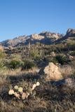 Opinión Catalina State Park de Arizona Fotografía de archivo