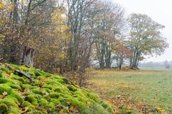 Opinión colorida de la temporada de otoño fotografía de archivo