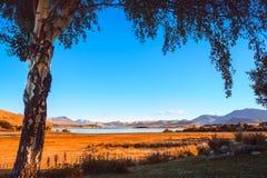 Opinión colorida del otoño del lago Tekapo enmarcada con un árbol en la salida del sol Imágenes de archivo libres de regalías