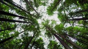 Opinión de ángulo bajo de árboles en el bosque 4k almacen de metraje de vídeo
