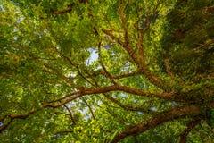 Opinión de ángulo bajo del árbol fotos de archivo libres de regalías