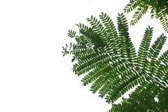 Opinión de ángulo bajo del árbol en el fondo blanco imágenes de archivo libres de regalías