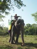 Opinión de ángulo bajo del montar a caballo del hombre en elefante imágenes de archivo libres de regalías