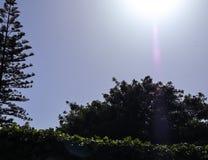 Opinión de ángulo bajo de la luz del sol y del árbol de abeto imagenes de archivo