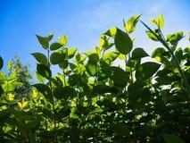 Opinión de ángulo bajo de plantas contra el cielo azul imágenes de archivo libres de regalías