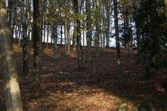 Opinión de árboles hermosa del otoño sobre las montañas Foto de archivo
