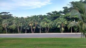 Opinión de árboles lateral del camino Foto de archivo libre de regalías