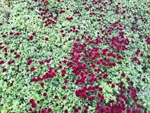 Opinión de alto ángulo de flores imágenes de archivo libres de regalías