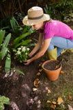 Opinión de alto ángulo la mujer que planta las flores mientras que se agacha Foto de archivo