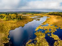 Opinión de alto ángulo de un humedal y de un bosque de oro imagenes de archivo