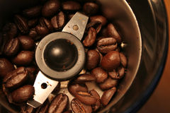 Opinión de amoladora de café del ojo de los pájaros Fotografía de archivo libre de regalías