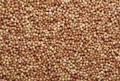 Opinión de arriba de las semillas de coriandro para el fondo o la textura Imagenes de archivo