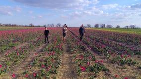 Opinión de arriba la familia feliz que camina hacia cámara en el campo de tulipanes en la floración en fondo del cielo azul claro metrajes