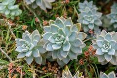 Opinión de arriba succulents en invernadero Foto de archivo libre de regalías