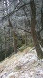 Opinión de Banff de los acantilados de la montaña del túnel Fotos de archivo