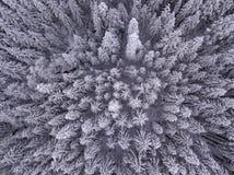 Opinión de Birdseye de árboles nevados en el desierto en invierno foto de archivo
