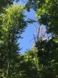 Opinión de cielo azul del bosque Imagen de archivo