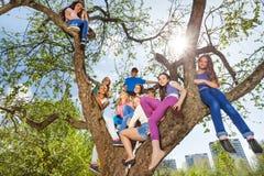 Opinión de debajo de los adolescentes que se sientan en el árbol Imagenes de archivo
