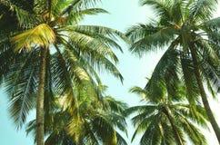 Opinión de debajo sobre tops de la palma del verde del coco contra el fondo del cielo azul fotos de archivo