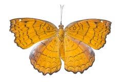 Opinión de Doesal de la mariposa angulosa del echador y de x28; Ariadne de Ariadne y x29; ISO imagenes de archivo