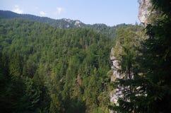 Opinión de Eslovaquia de la montaña del bosque del rastro foto de archivo libre de regalías