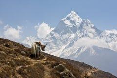 Opinión de Everest Imagen de archivo libre de regalías