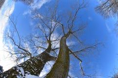 Opinión de Fisheye de árboles de la tierra al cielo Foto de archivo libre de regalías