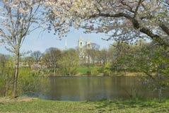 Opinión de flor de cereza Imagen de archivo