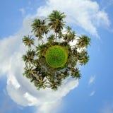 opinión de 360 grados de la palmera Fotografía de archivo libre de regalías