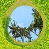 opinión de 360 grados de palmeras Fotografía de archivo