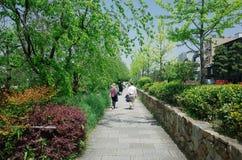 Opinión de la calle de Kyoto Fotografía de archivo libre de regalías