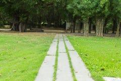 Opinión de la calzada, jardín botánico Fotos de archivo