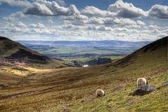 Opinión de la colina de Pentland Foto de archivo