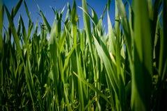 Opinión de la hierba Fotos de archivo libres de regalías