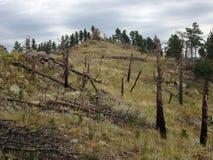 Opinión de la ladera del bosque y de la pradera Foto de archivo libre de regalías
