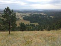 Opinión de la ladera del bosque y de la pradera Imágenes de archivo libres de regalías
