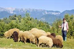 Opinión de la luz del día al viejo pastor con la mirada de ovejas fotografía de archivo libre de regalías