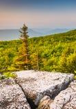 Opinión de la mañana del coto de las rocas del oso, en Dolly Sods Wilderness Imágenes de archivo libres de regalías