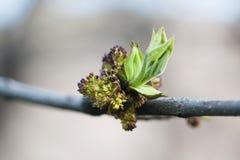 Opinión de la macro de la hoja del verde de la rama de árbol primavera y nuevo concepto de la vida Fondo en colores pastel suave  fotos de archivo