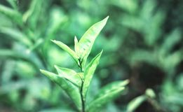 Opinión de la naturaleza del primer de la hoja verde Foto de archivo