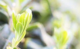 Opinión de la naturaleza del primer de la hoja verde en jardín en el verano bajo luz del sol Las plantas verdes naturales ajardin Fotografía de archivo